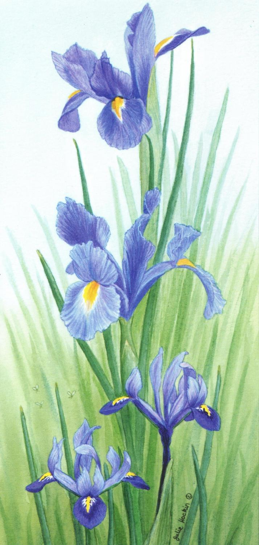 Tall Card - Iris