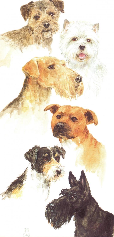 Tall Card - Terrier