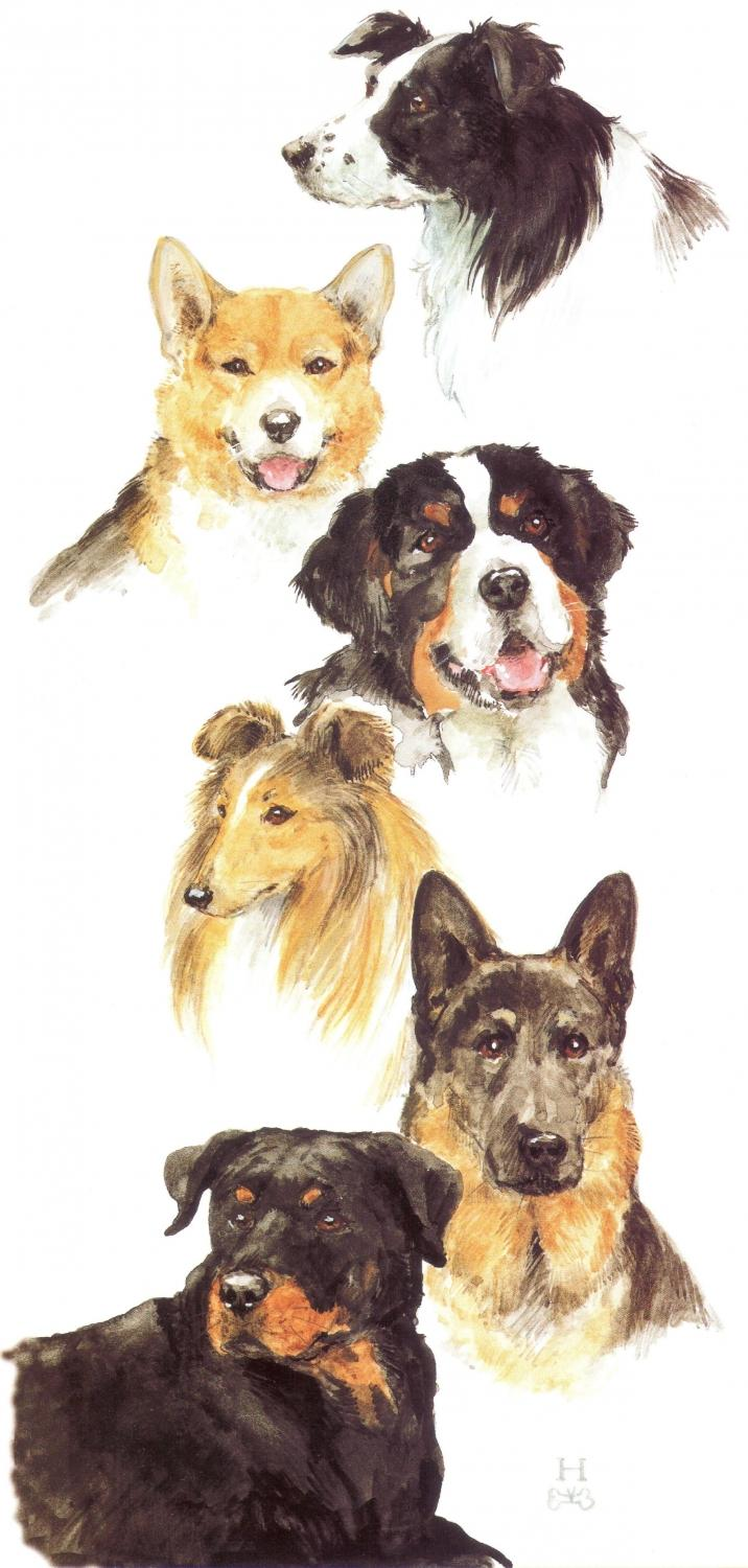 Tall Card - Working Dogs