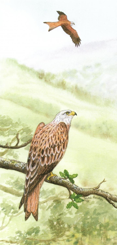 Tall Card - Red Kite