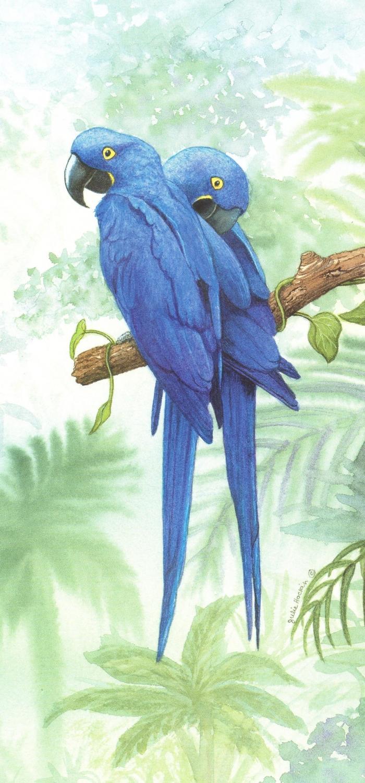 Tall Card - Hyacinth Macaw
