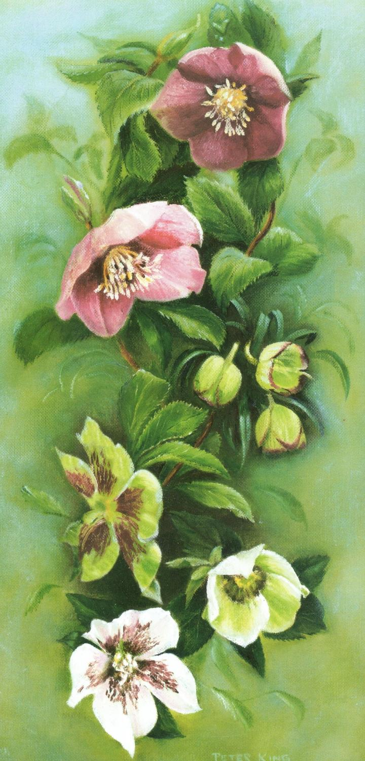 Tall Card - Helebores