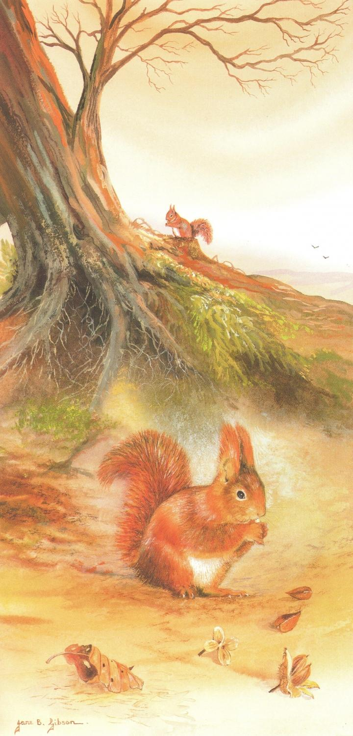 Tall Card - Red Squirrel