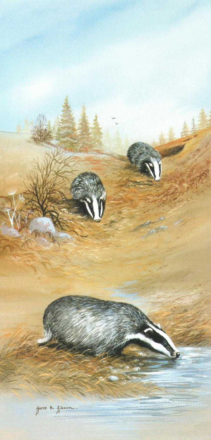 Tall Card - Badgers Drinking