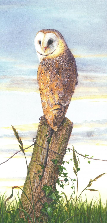 Tall Card - Barn Owl at Dusk