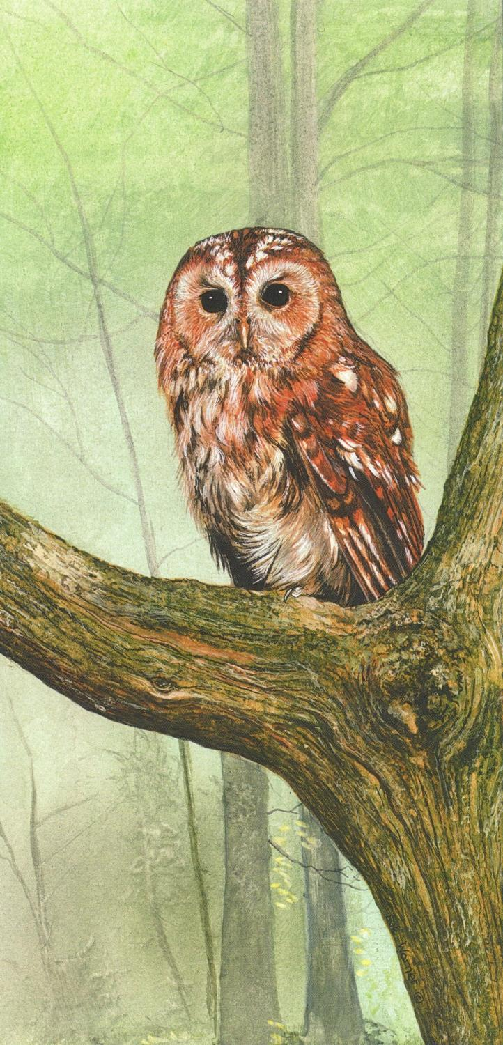 Tall Card - Tawny Owl at Rest