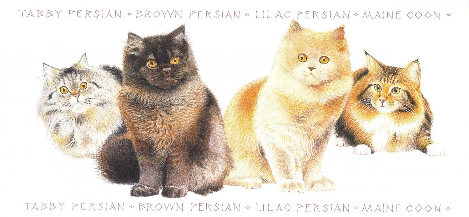 Tall Card - Persian Cats