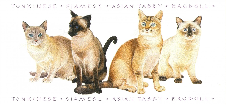 Tall Card - Asian Cats