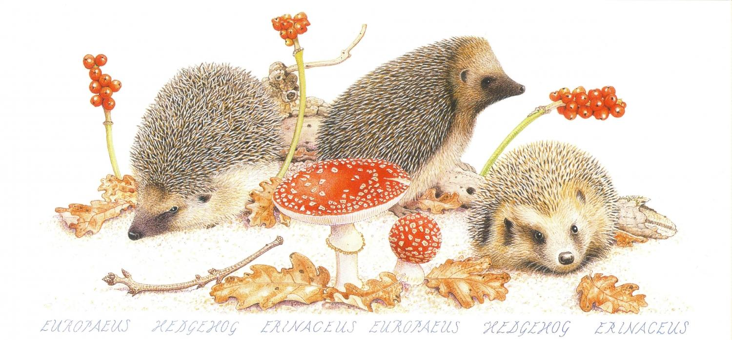 Tall Card - Hedgehogs