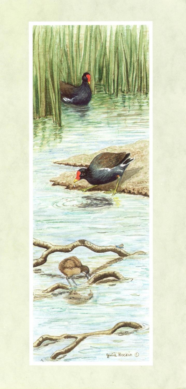 Tall Card - Moorhen