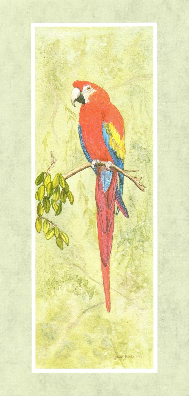 Tall Card - Scarlet Macaw