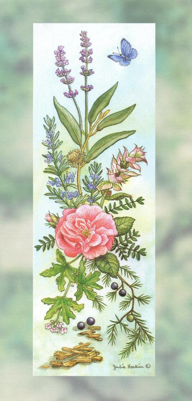 Tall Card - Aromatherapy Herbs