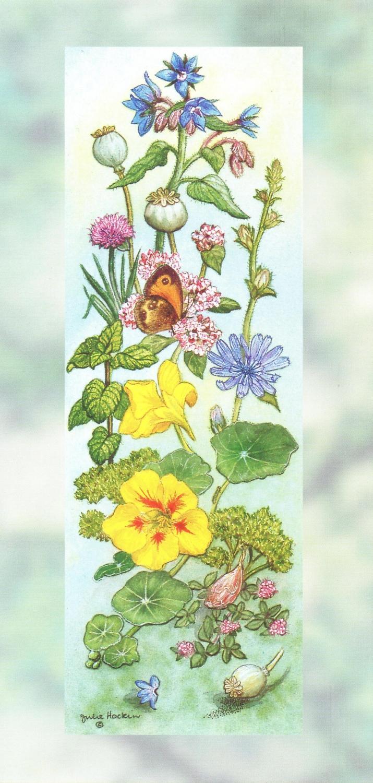 Tall Card - Culinary Herbs