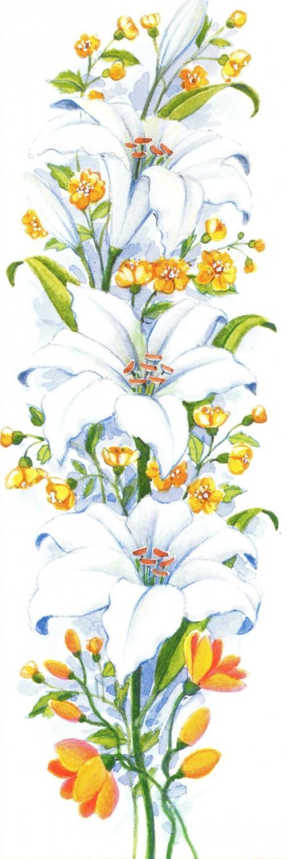Narrow Card - White Lily