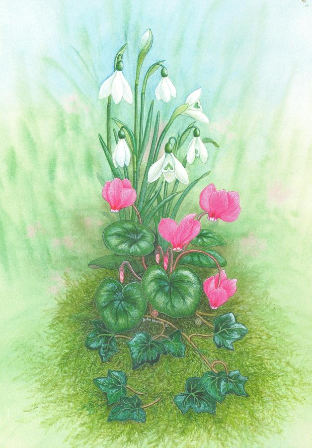 Card - Cyclamen & Snowdrop