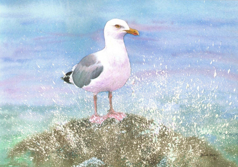 Card - Seagull on Rock