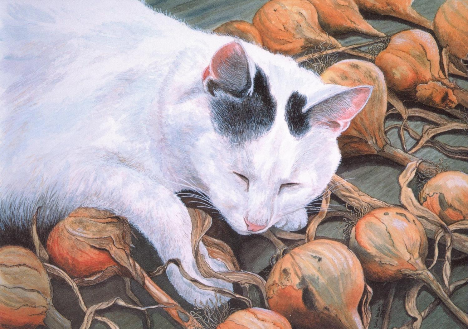 Card - Cat with Onions