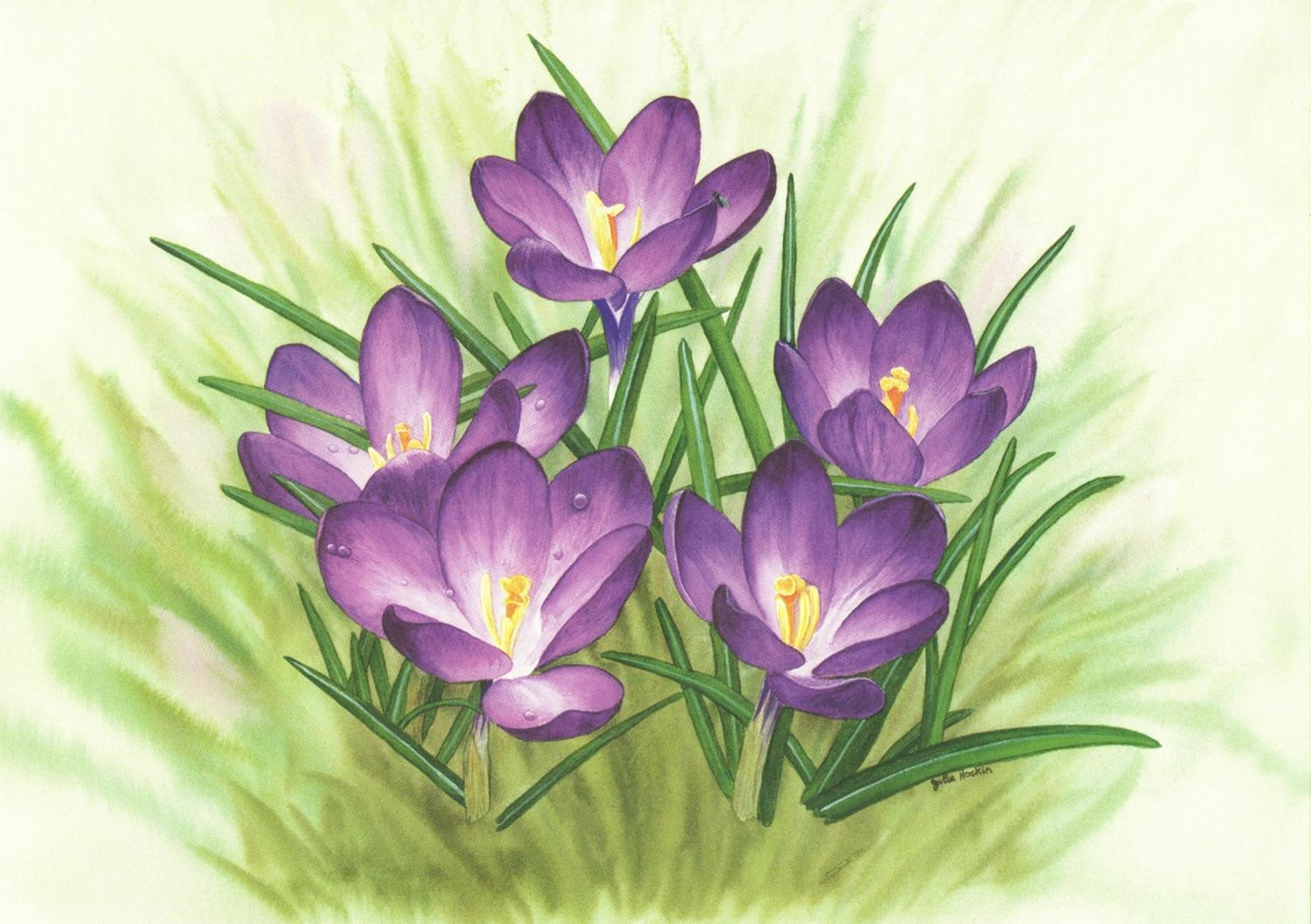 Card - Crocuses