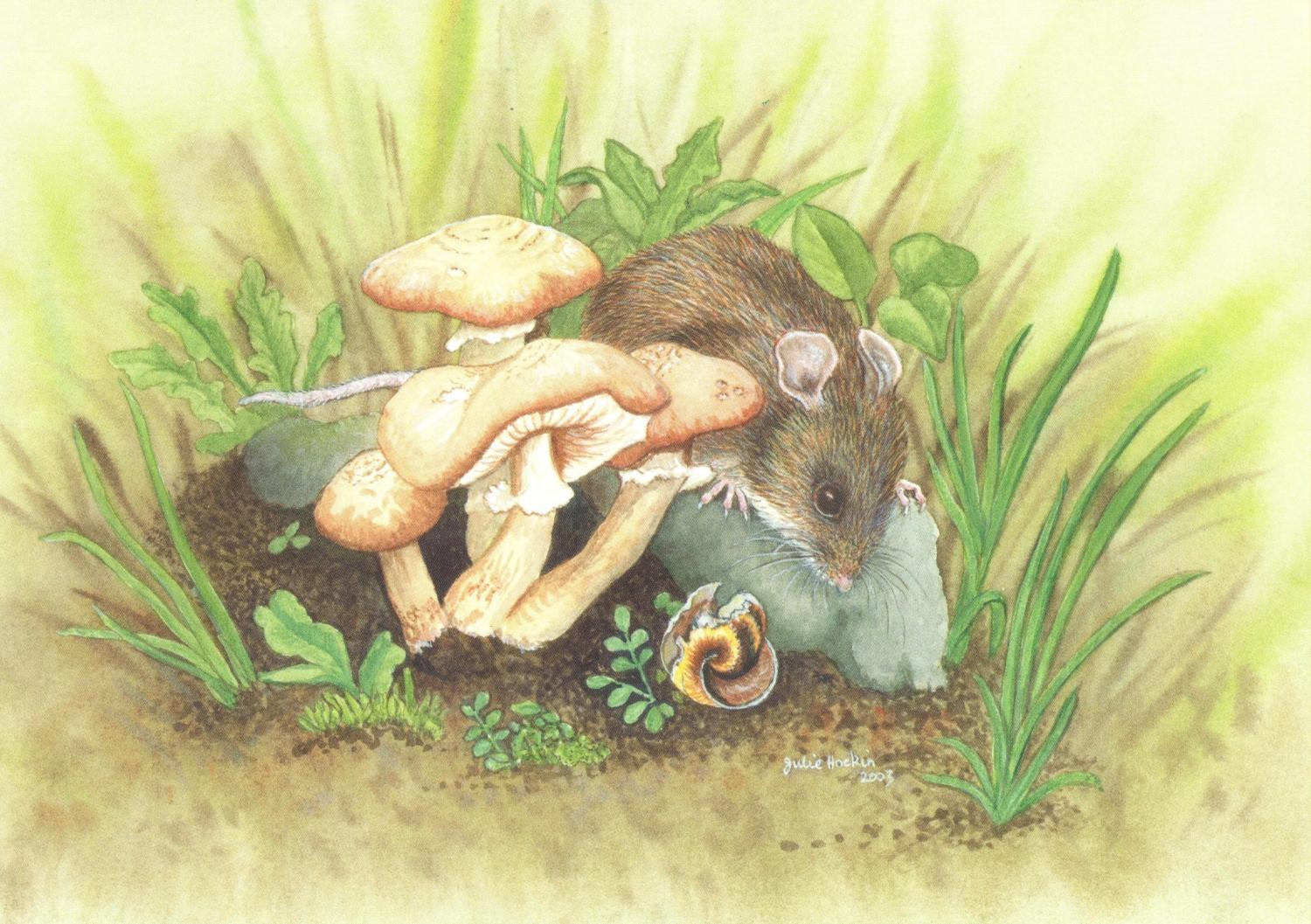 Card - Woodmouse