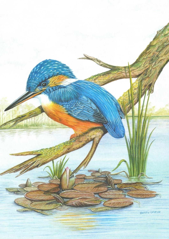 Card - Kingfisher & Lilies
