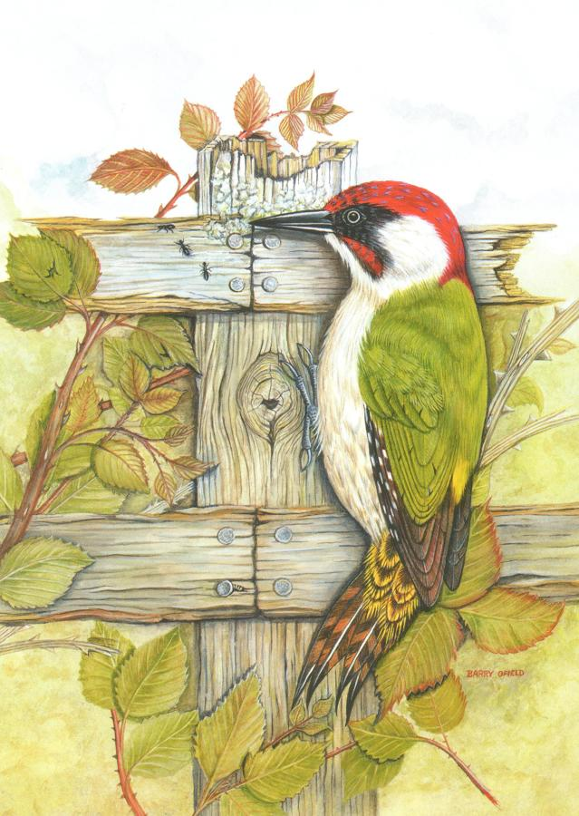 Card- Green Woodpecker