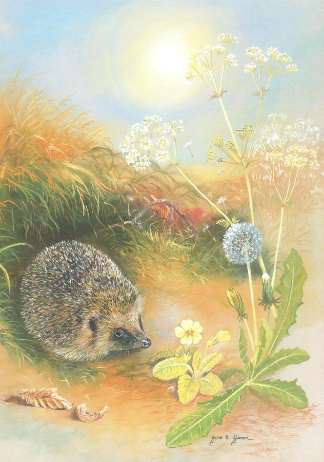 Card - Hedgehog & Dandelion