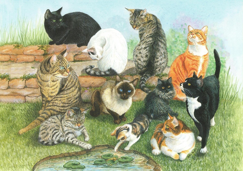 Card - Catscape