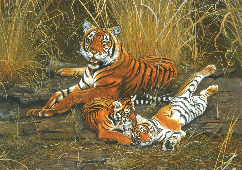 Card - Tiger, Tiger