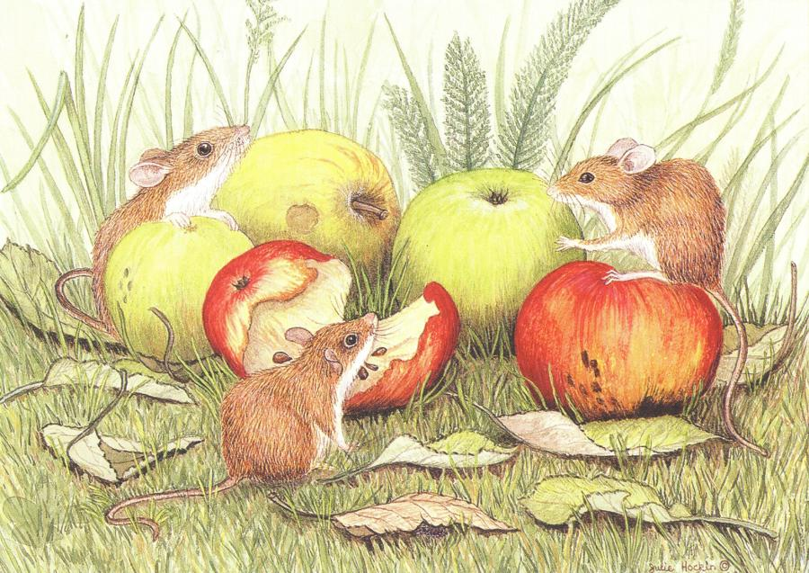 A6 Card - Field Mice & Apples