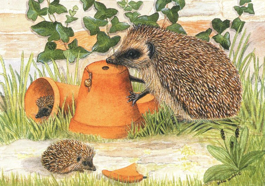 A6 Card - Hedgehog & Flowerpots