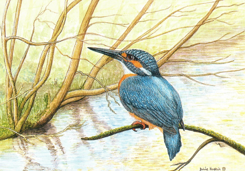 A6 Card - Kingfisher