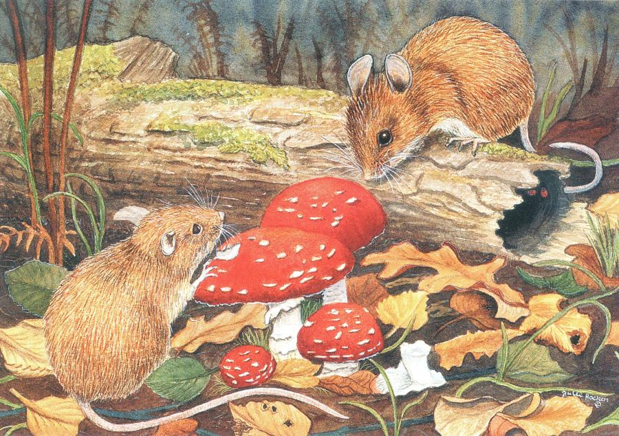 A6 Card - Woodmice