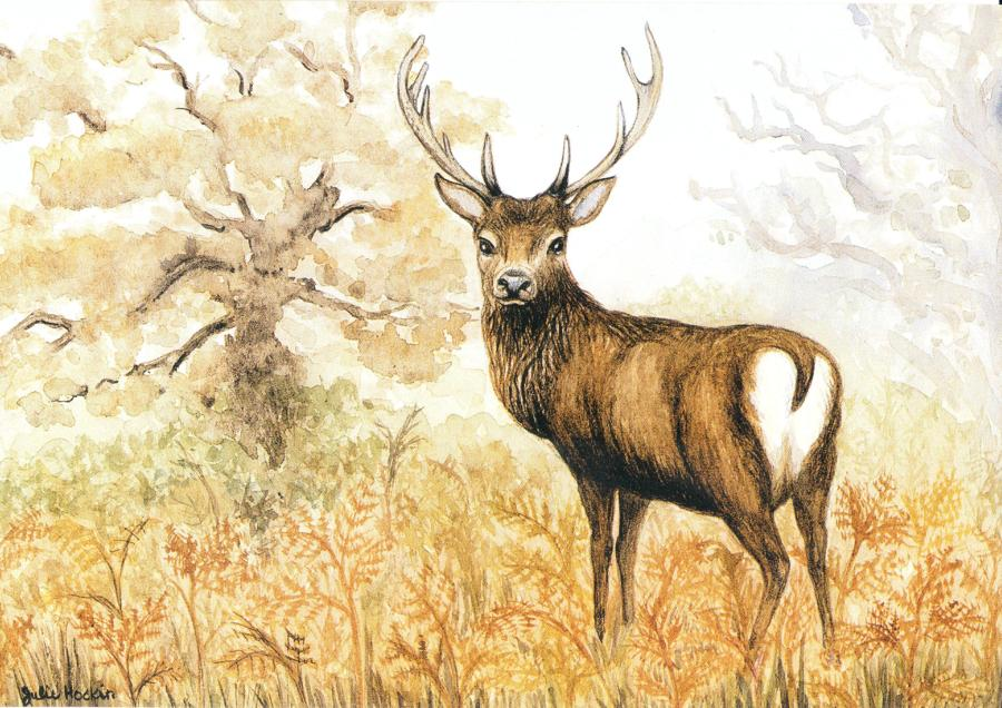 A6 Card - Red Deer Stag