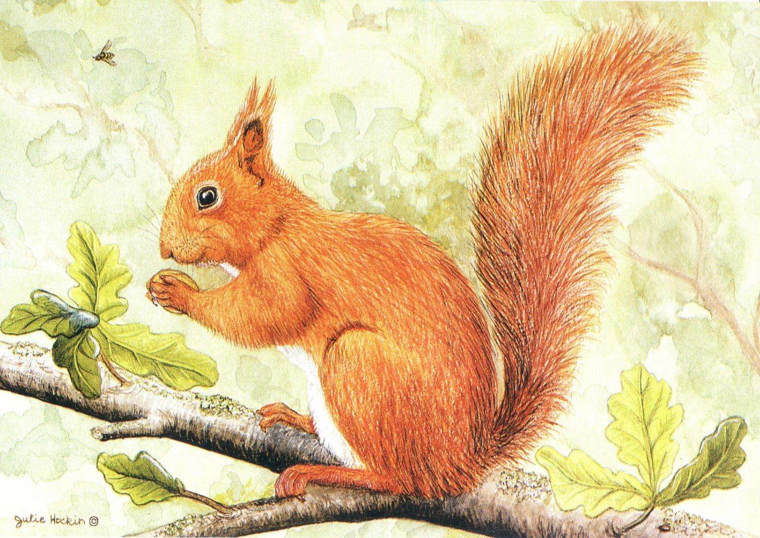 A6 Card - Red Squirrel on Branch