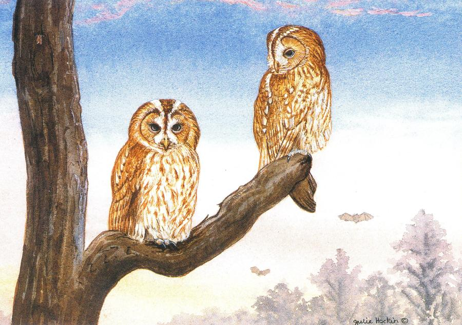 A6 Card - Tawny Owls at Sunset