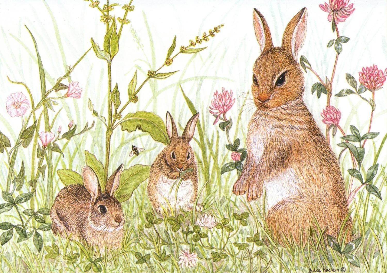 A6 Card - Rabbits