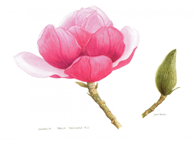 A6 Card - Magnolia