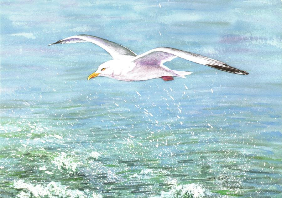 A6 Card - Seagull in Flight