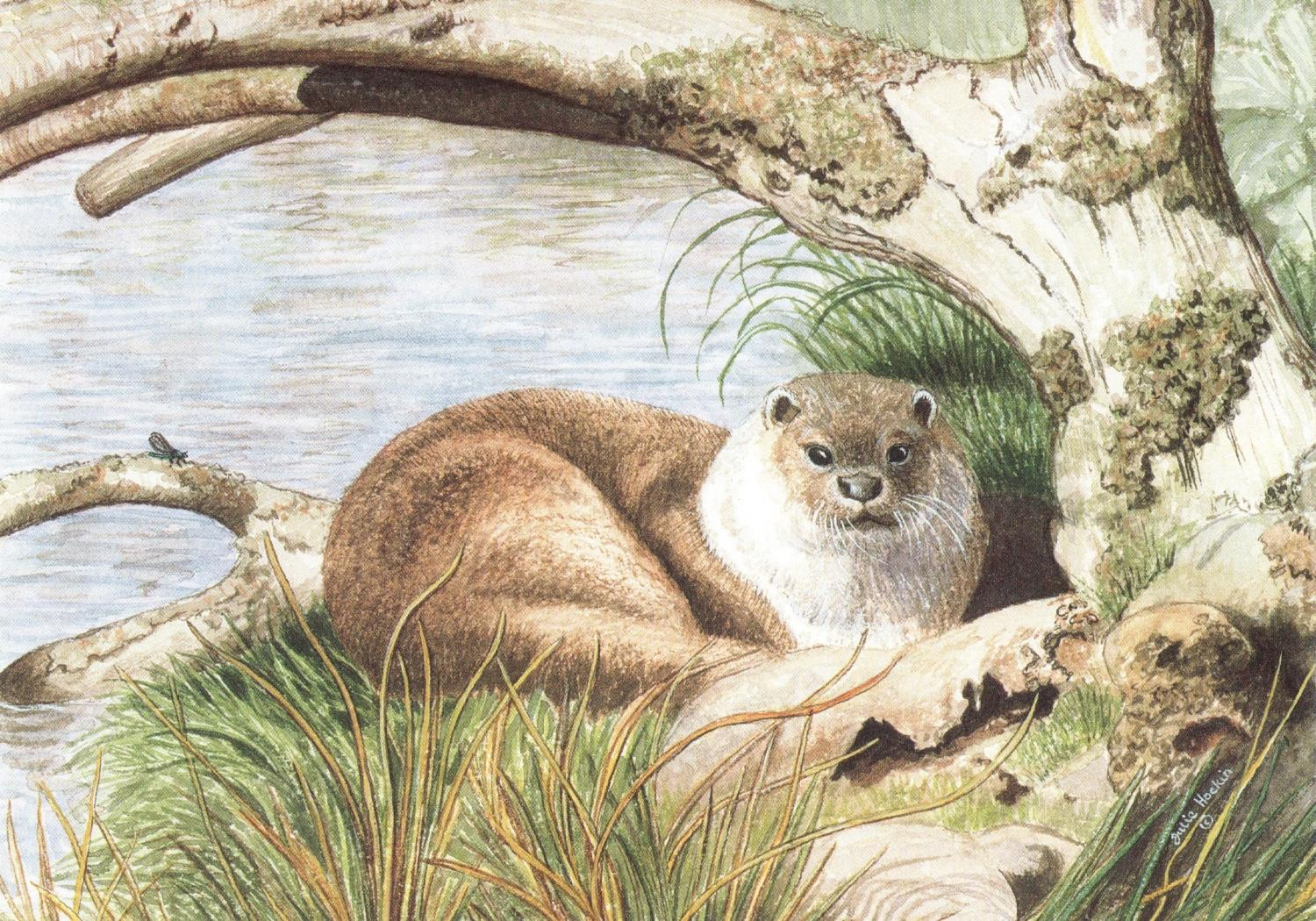 A6 Card - Taw the Otter