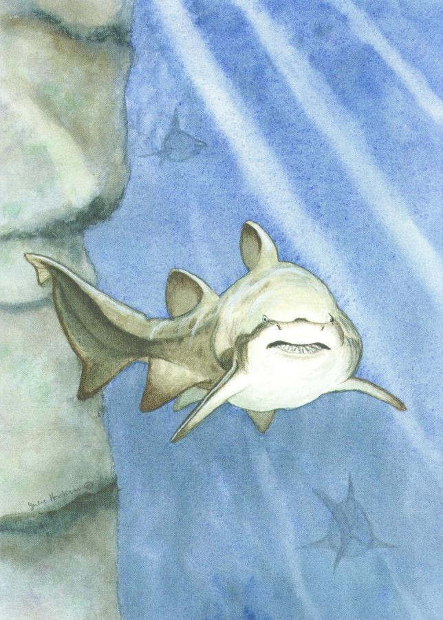 A6 Card - Shark