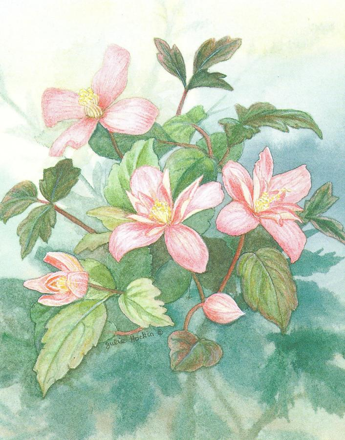 Small Card - Clematis