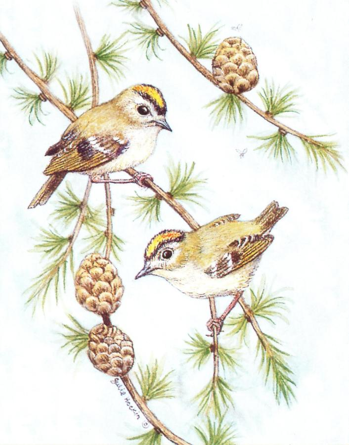 Small Card - Goldcrest