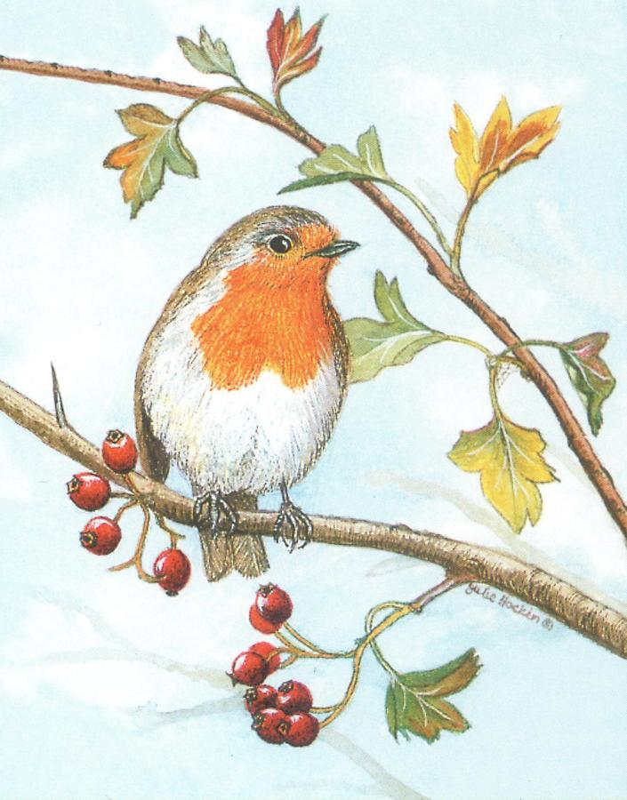 Small Card - Robin