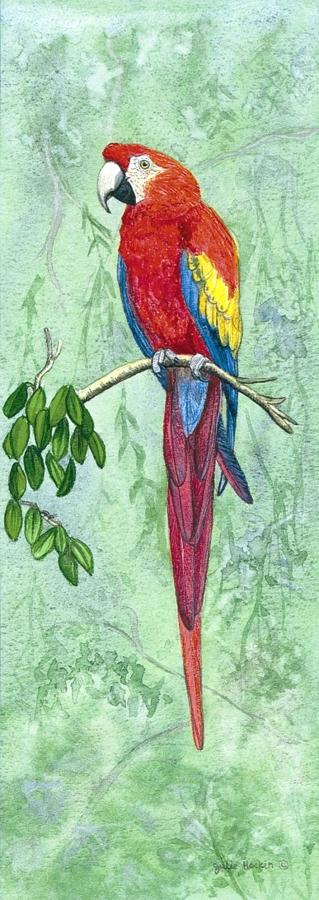 Bookmark - Scarlet Macaw