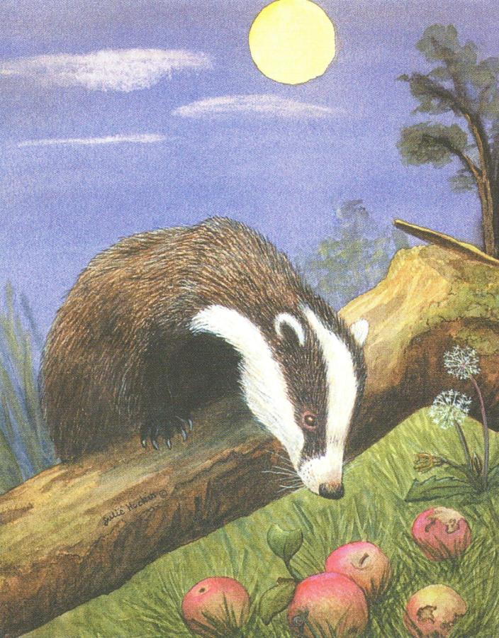 Small Card - Badger
