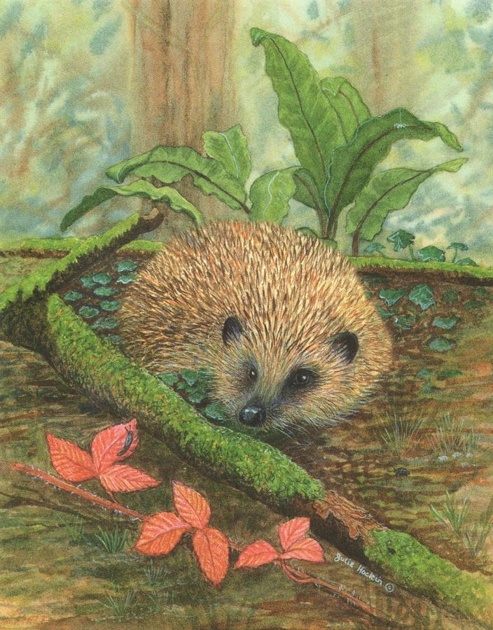 Small Card - Hedgehog