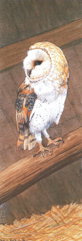 Bookmark - Barn Owl