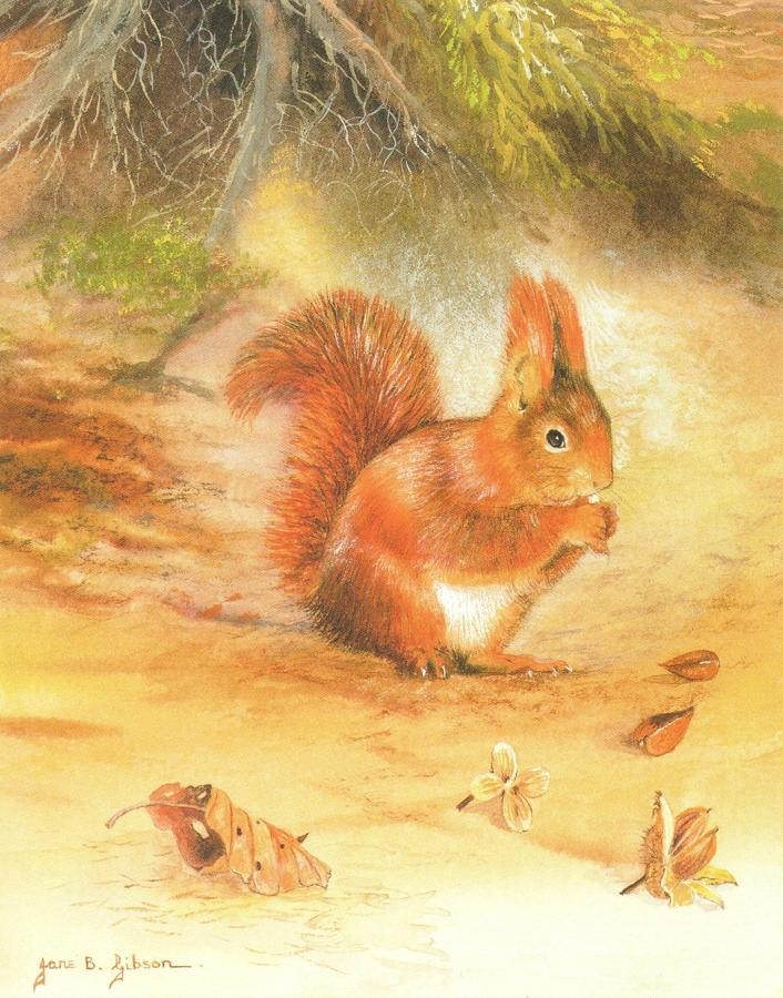 Small Card - Red Squirrel
