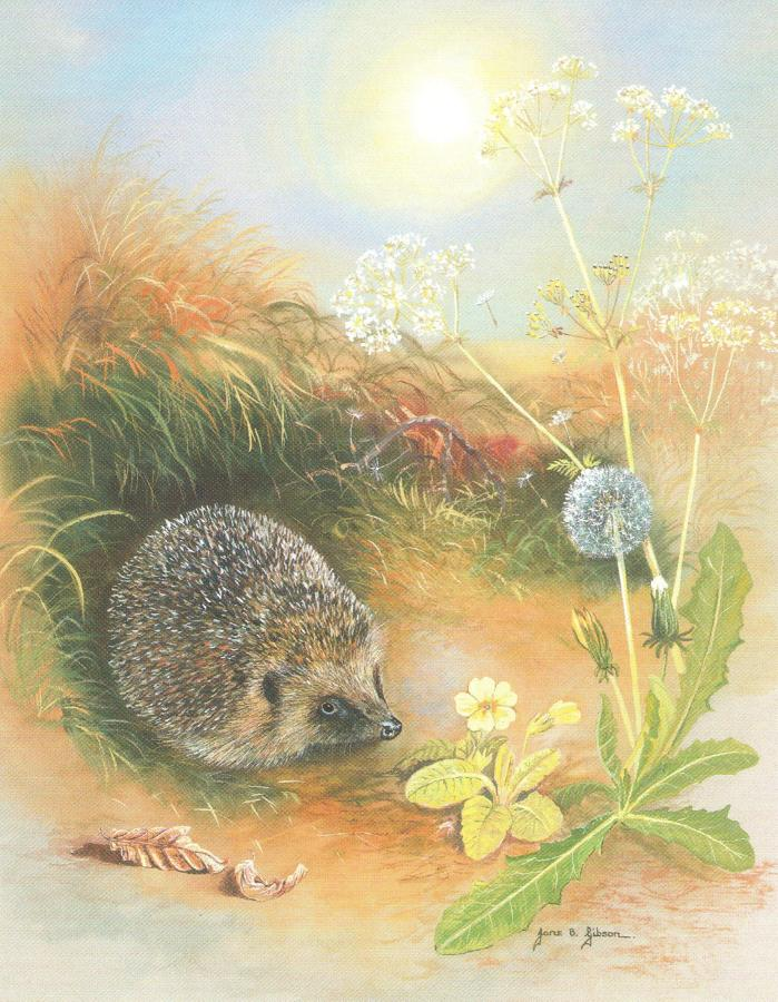 Small Card - Hedgehog & Dandelion