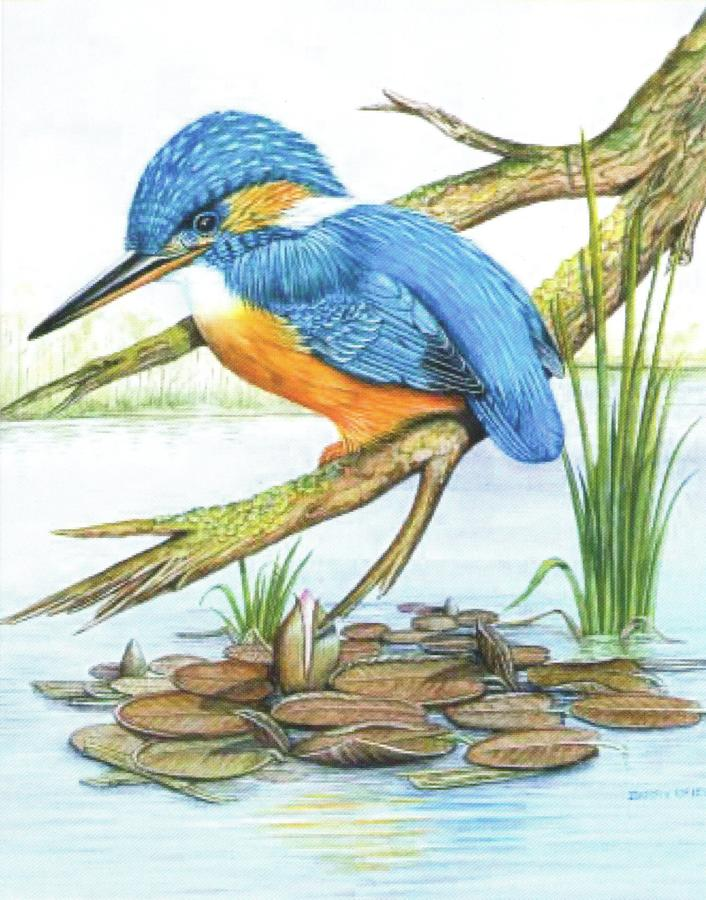 Small Card - Kingfisher & Lilies